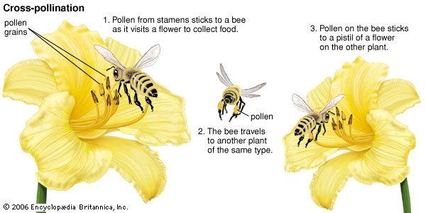 process-cross-pollination-animal-pollinator